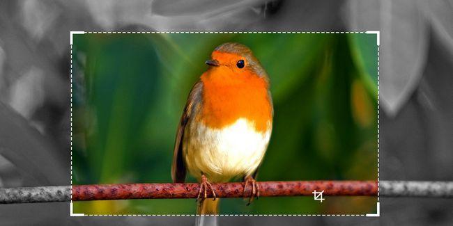 10 Herramientas de imágenes por lotes en línea gratis para cambiar el tamaño, convertir y optimizar