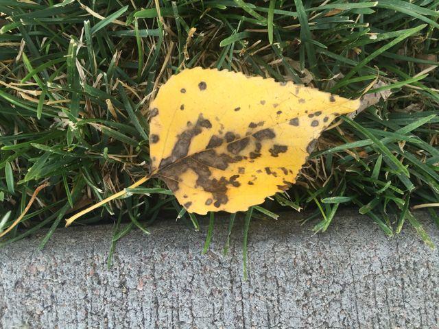 conseguir-cerca de hojas