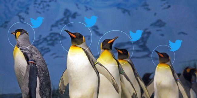 11 Linux cuentas que debe seguir en twitter