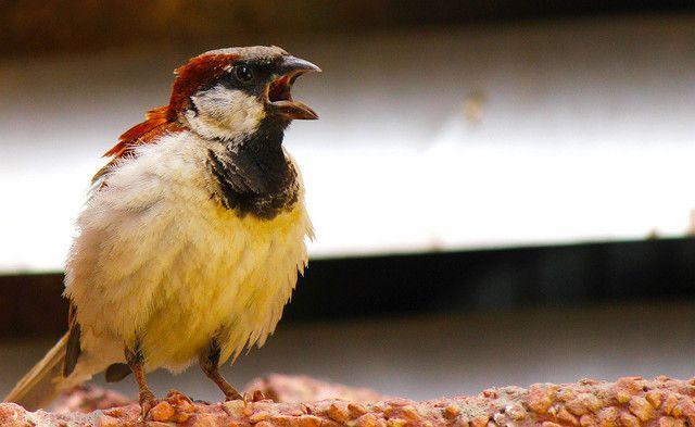 SmartphoneDumb-Angry-Birds