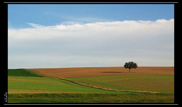 paisaje-comp