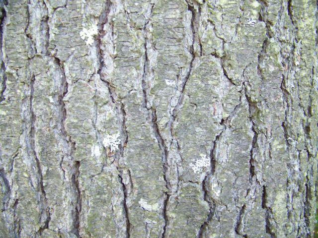 la vieja bark1