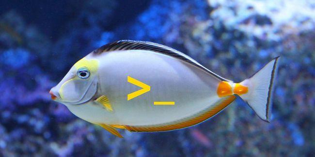 7 Razones por las que debe instalar la cáscara de pescado