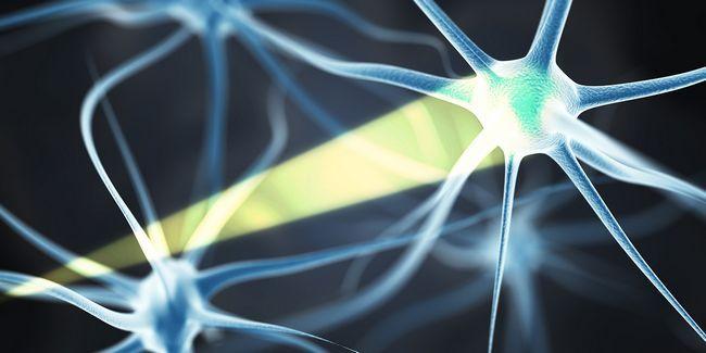 Brain control de luz: es posible con la optogenética