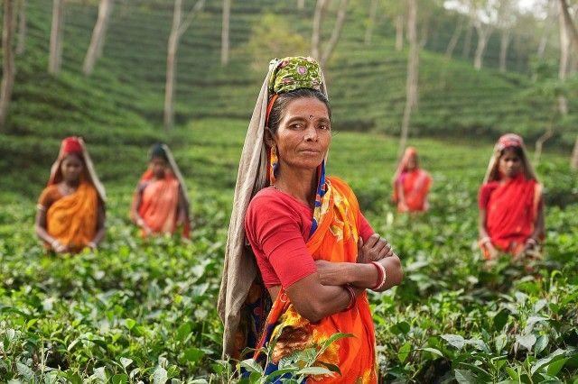 La gente en la India en una granja