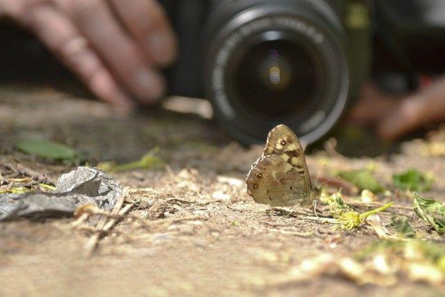 mariposa en el foco