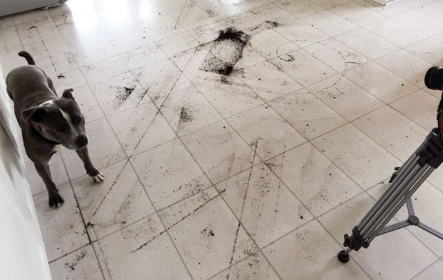 ilife a4 - análisis de suelo de la cocina
