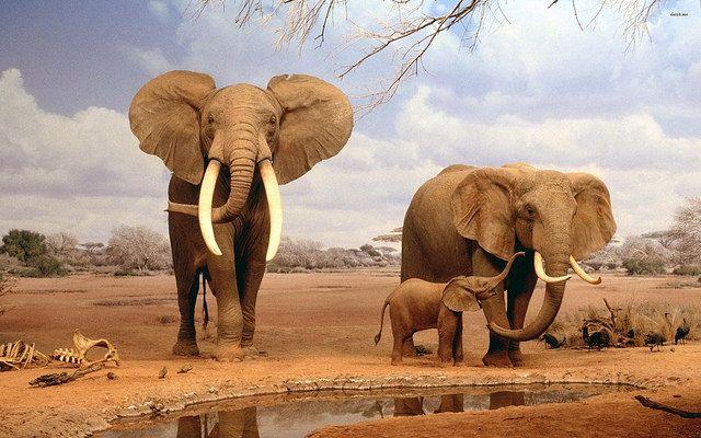 Los elefantes salvajes en la sabana africana