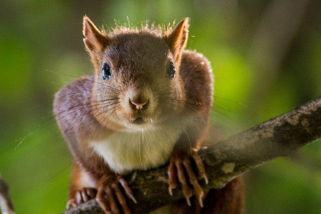 La vida silvestre Ardilla en las ramas Close Up