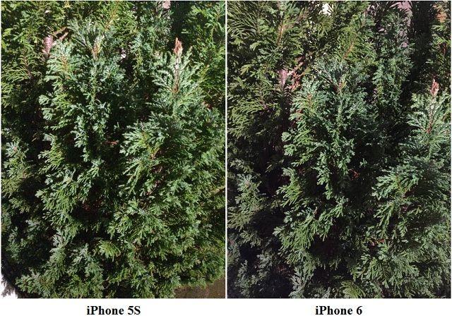 5S-6 Comparación