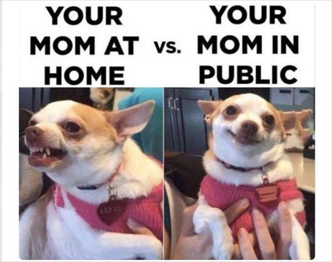 perro divertido madre pinterest