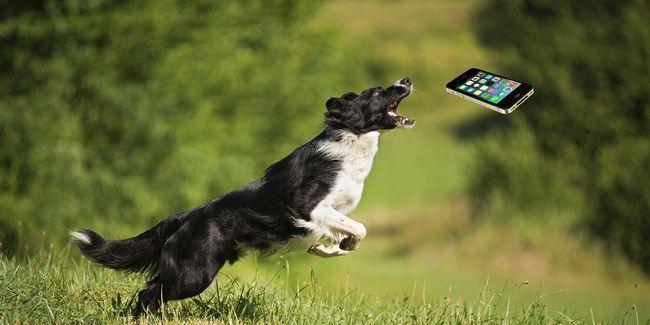 Estos aparatos de entrenamiento para mascotas mantendrá su amigo peludo en línea