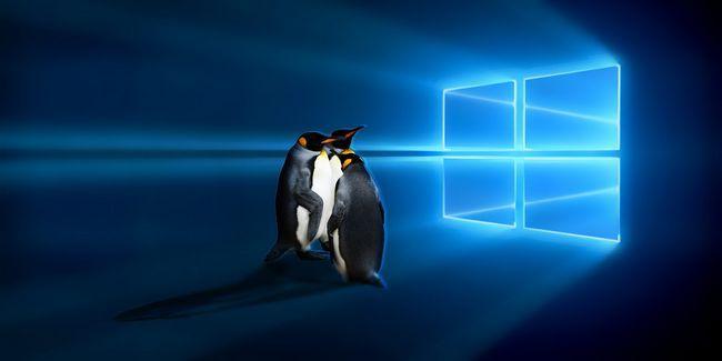Los 5 mejores sistemas operativos linux se deben tratar en una máquina virtual