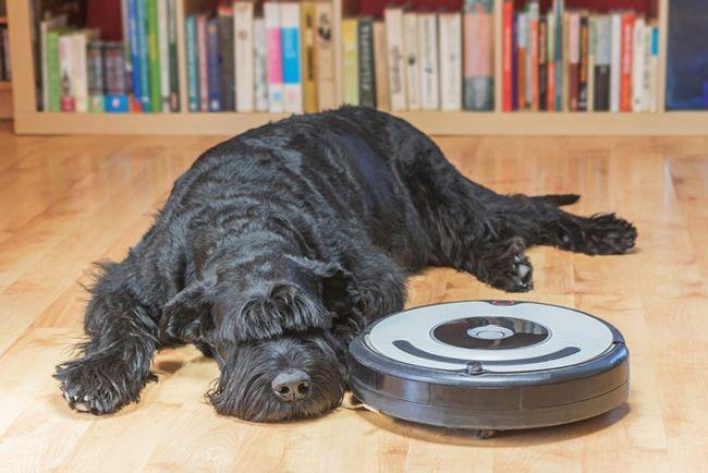vacío robot perro